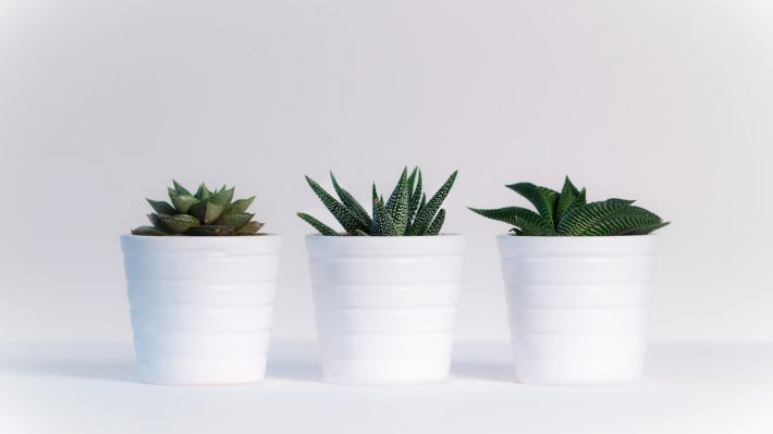 5 Plants Beneficial For Your Room and Health